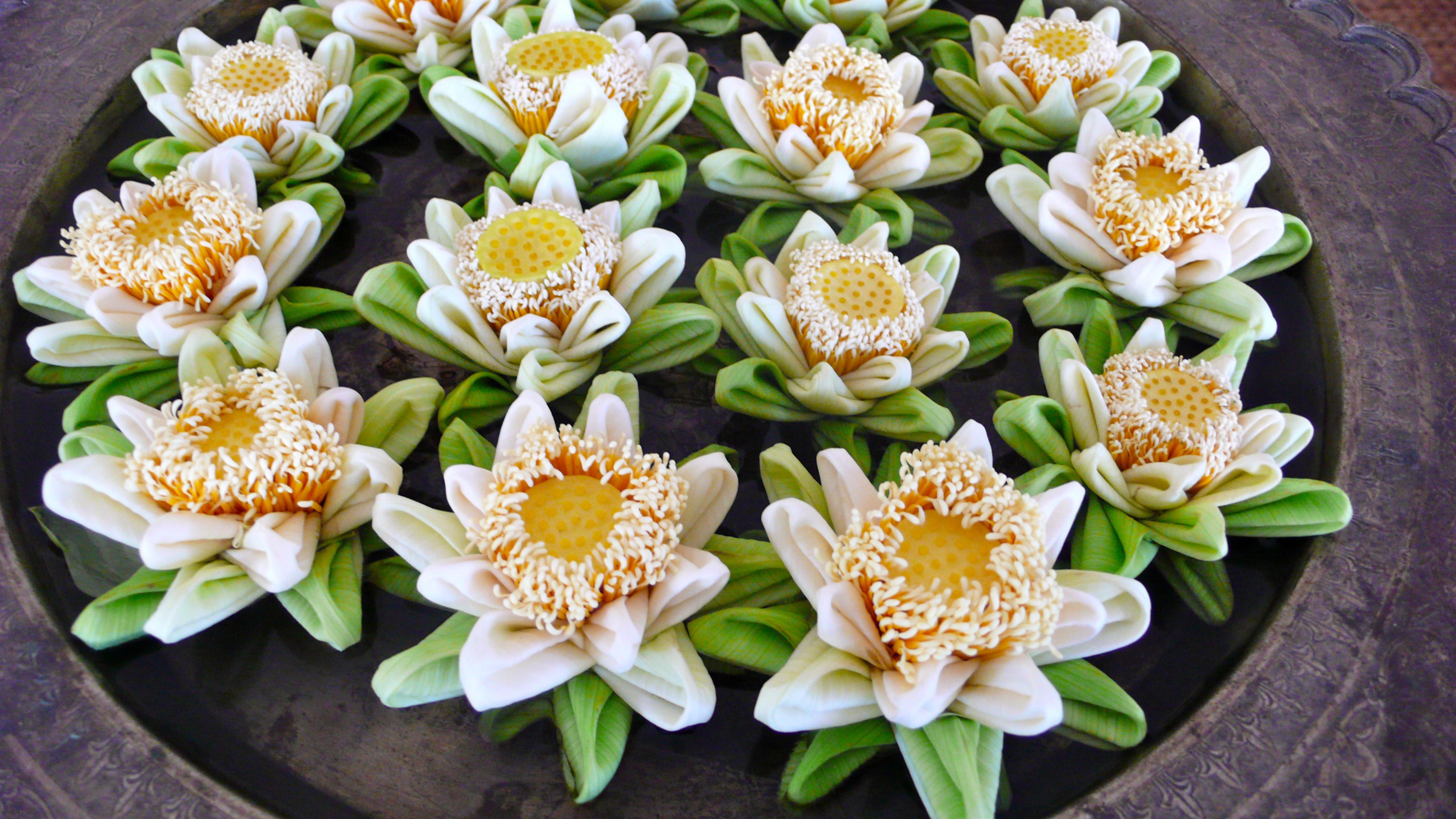 folding lotus flowers