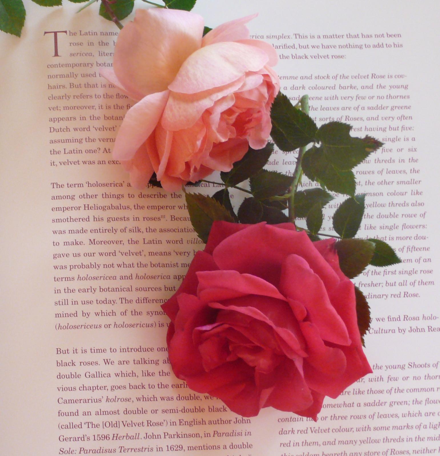 ROSES, slimpaley.com