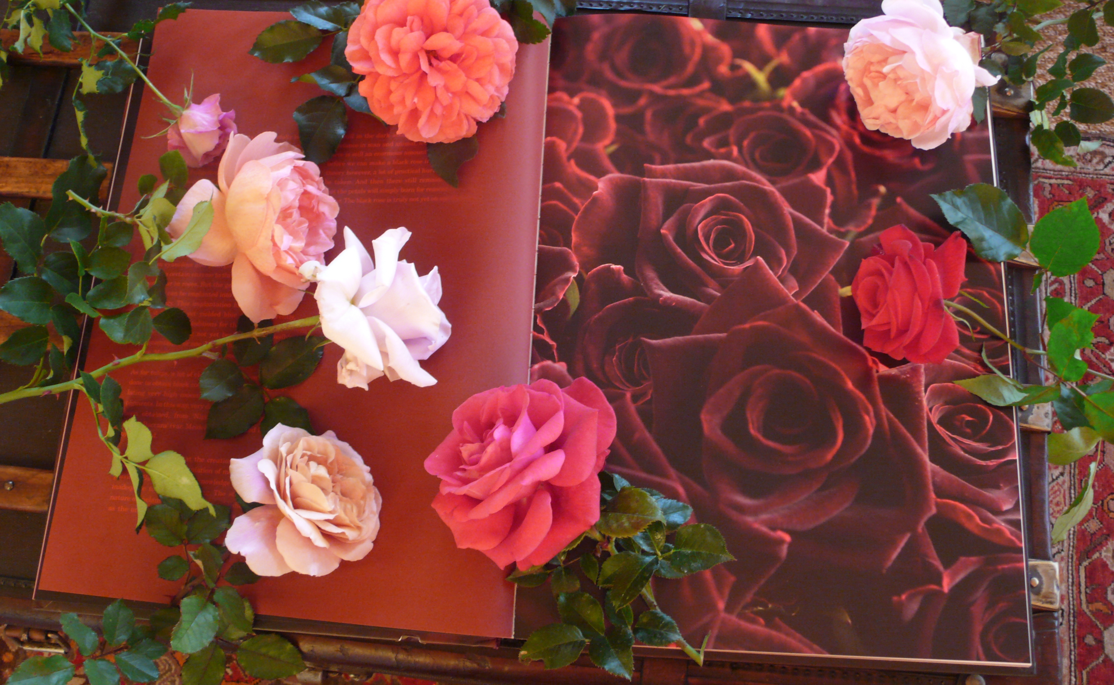 Roses, roses, roses, slimpaley.com