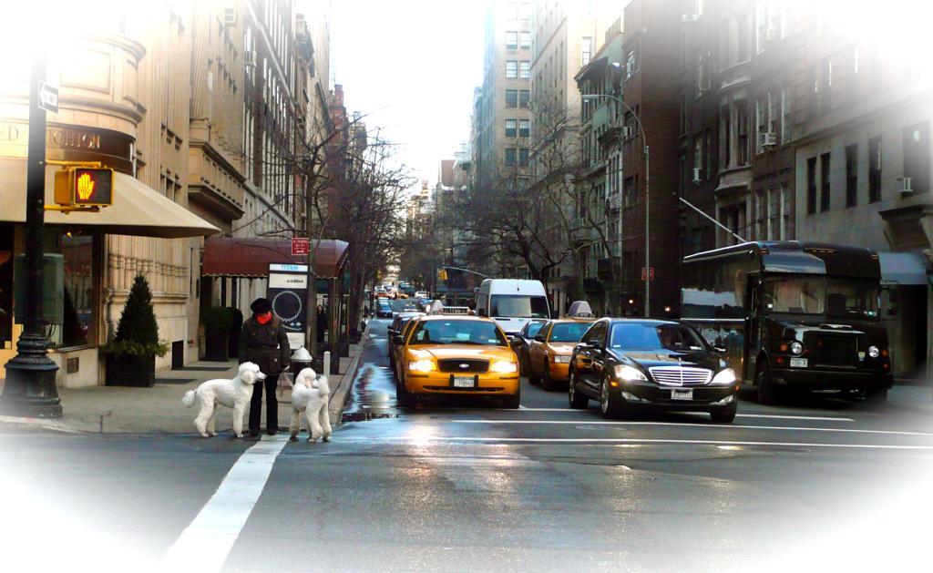 NYC, slimpaley.com