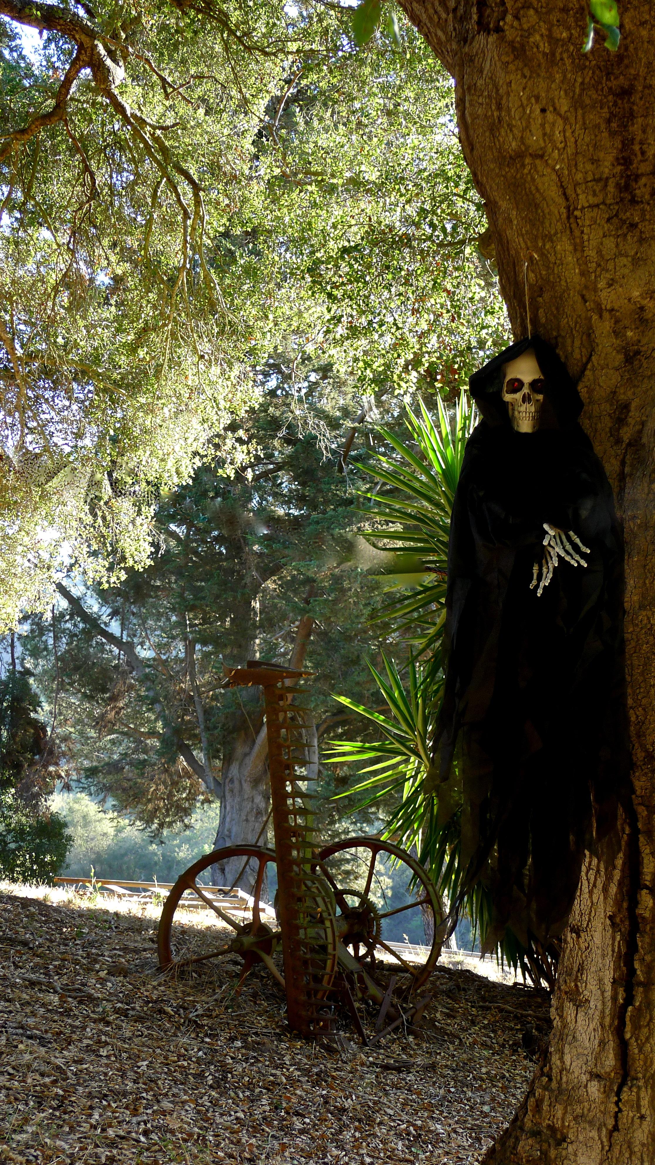 hanging skeleton, Slim Paley