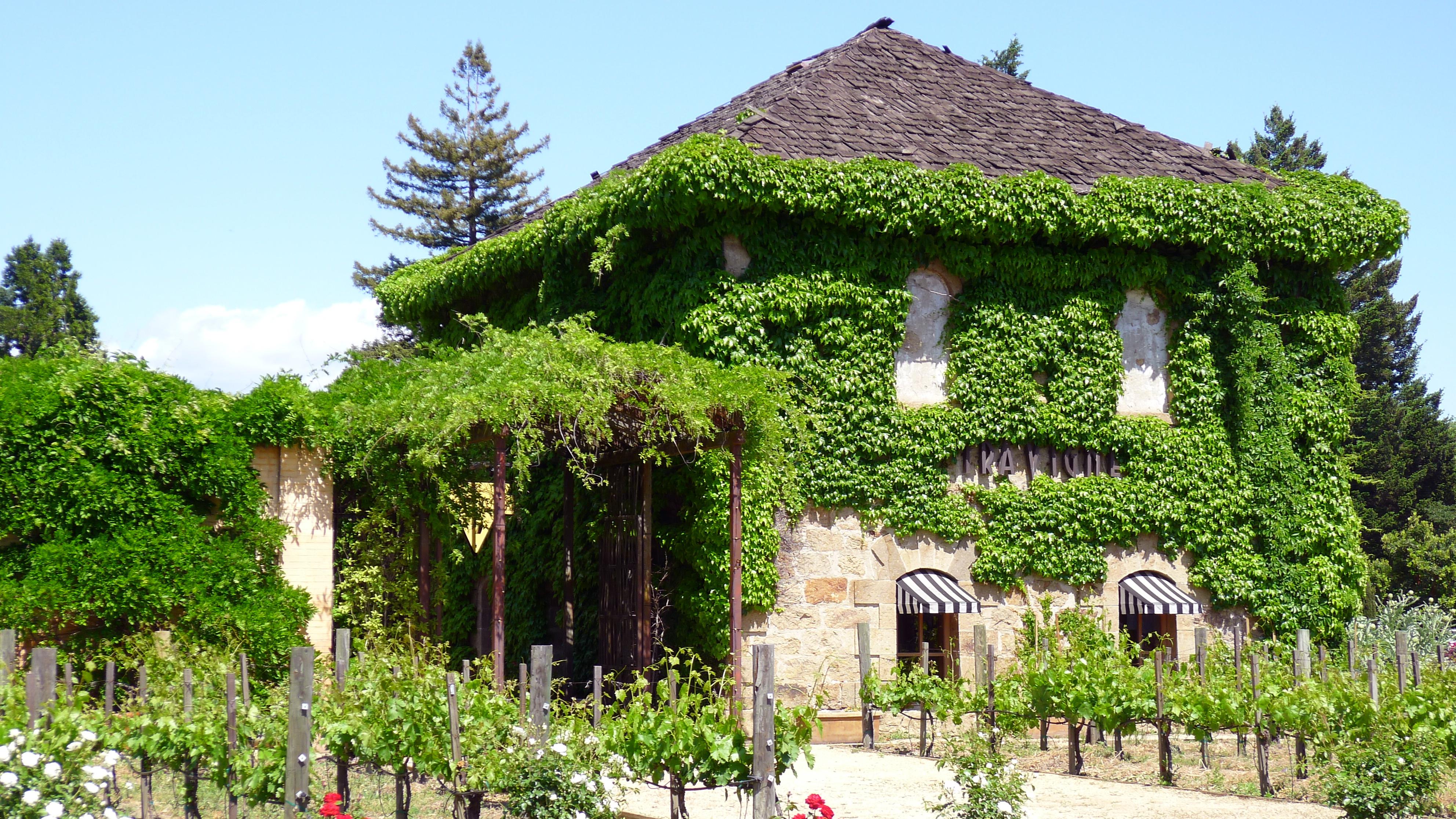 ivy clad building