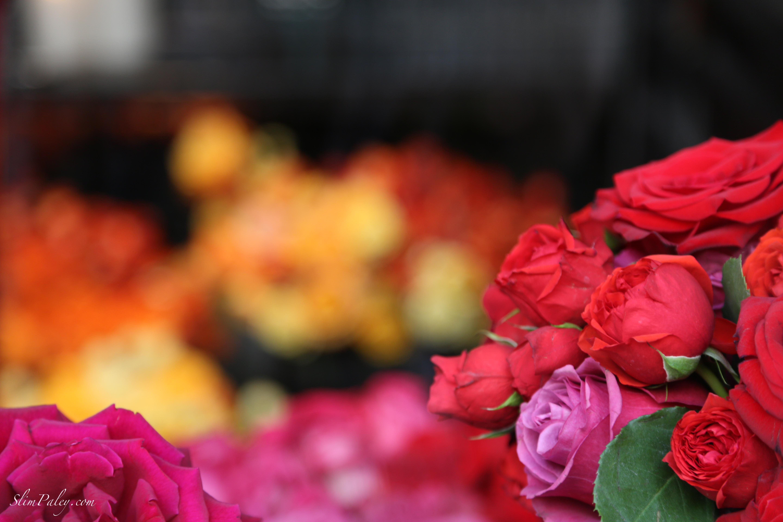 Dani Roses, Paris