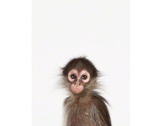 Baby-Monkey-Art-for-Nursery