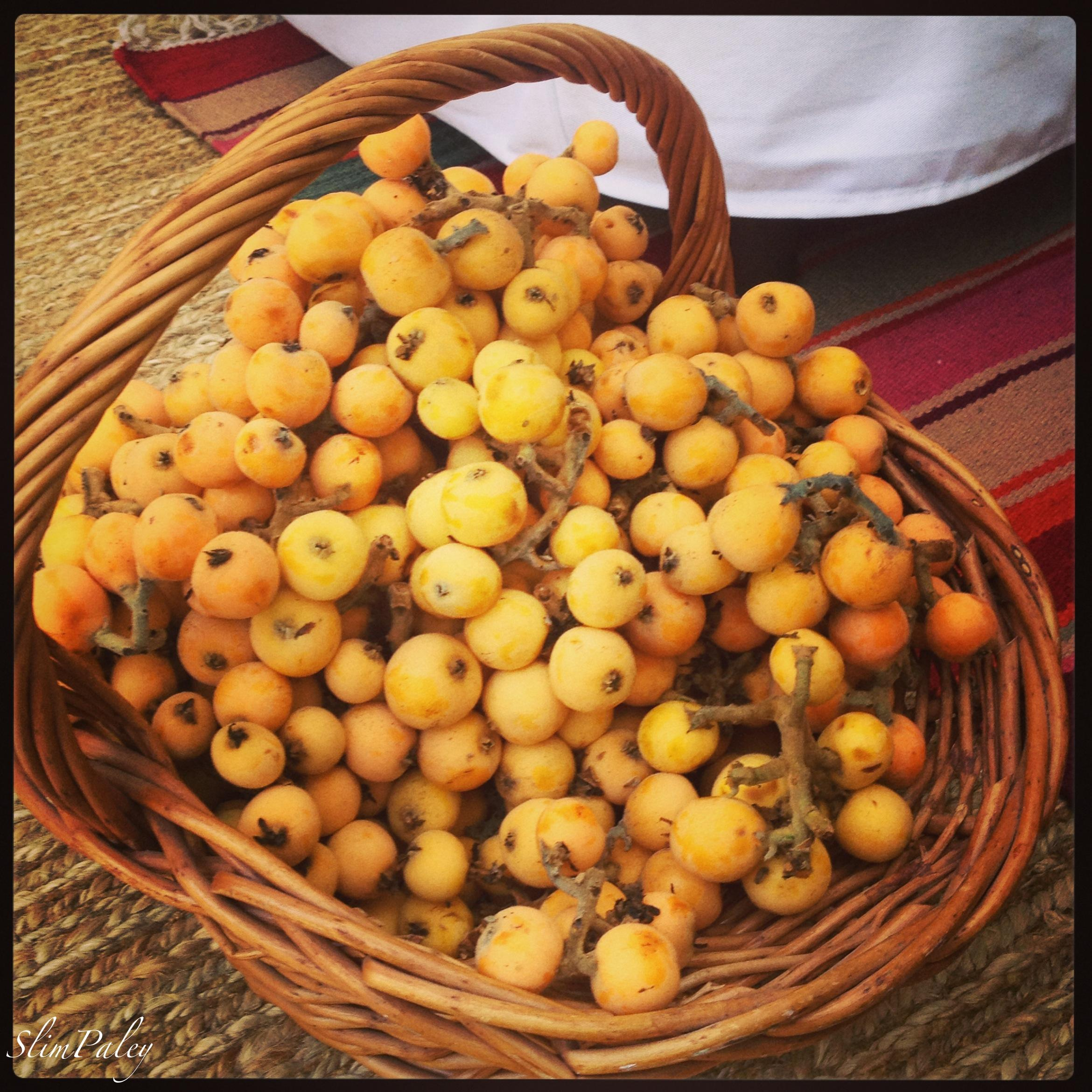 loquats, Slim Paley