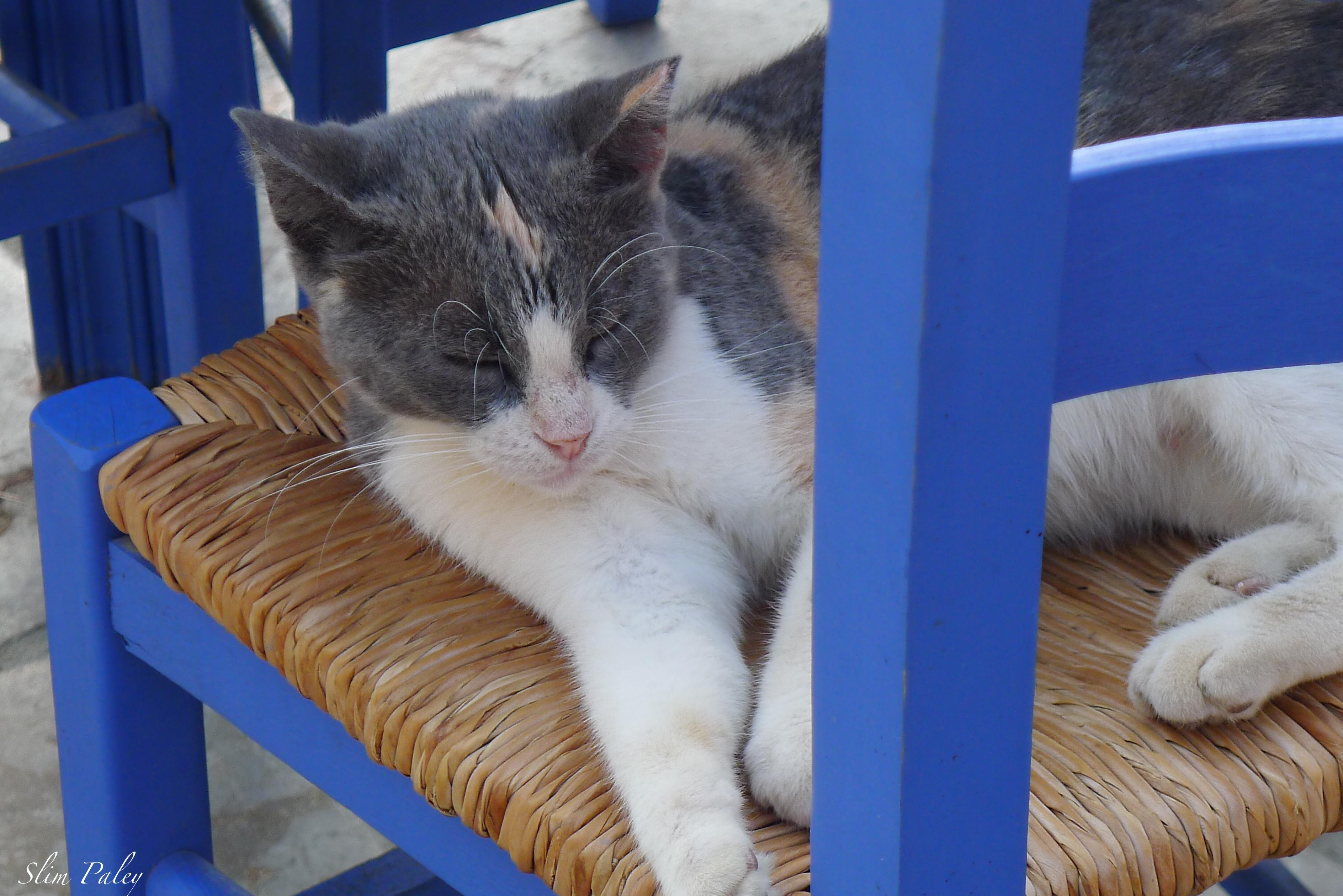 the cats in Greece