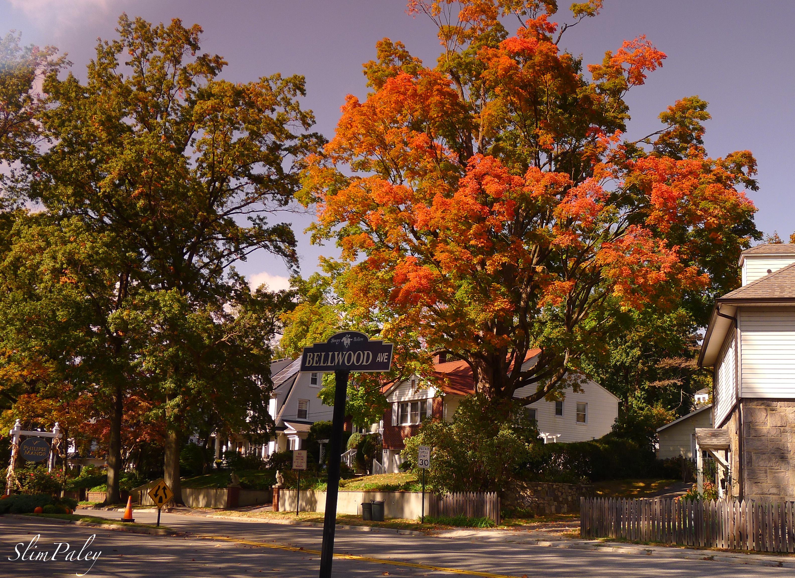 Fall Leaves slimpaley.com