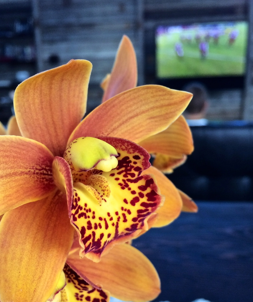 orchid & football