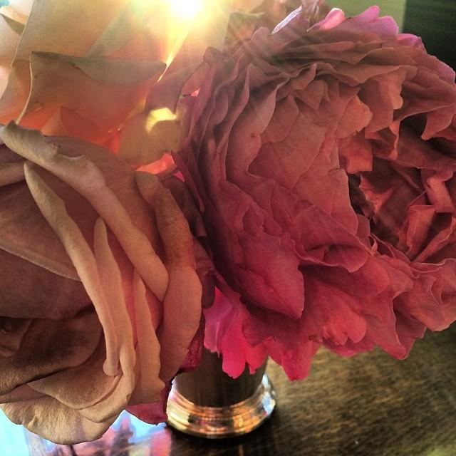 roses.slimpaley.com