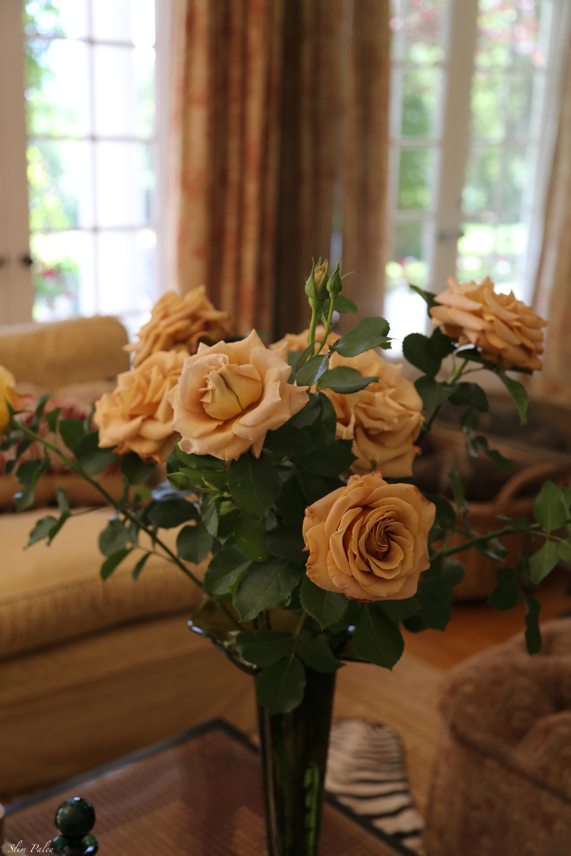 Golden Mustard roses slimpaley.com