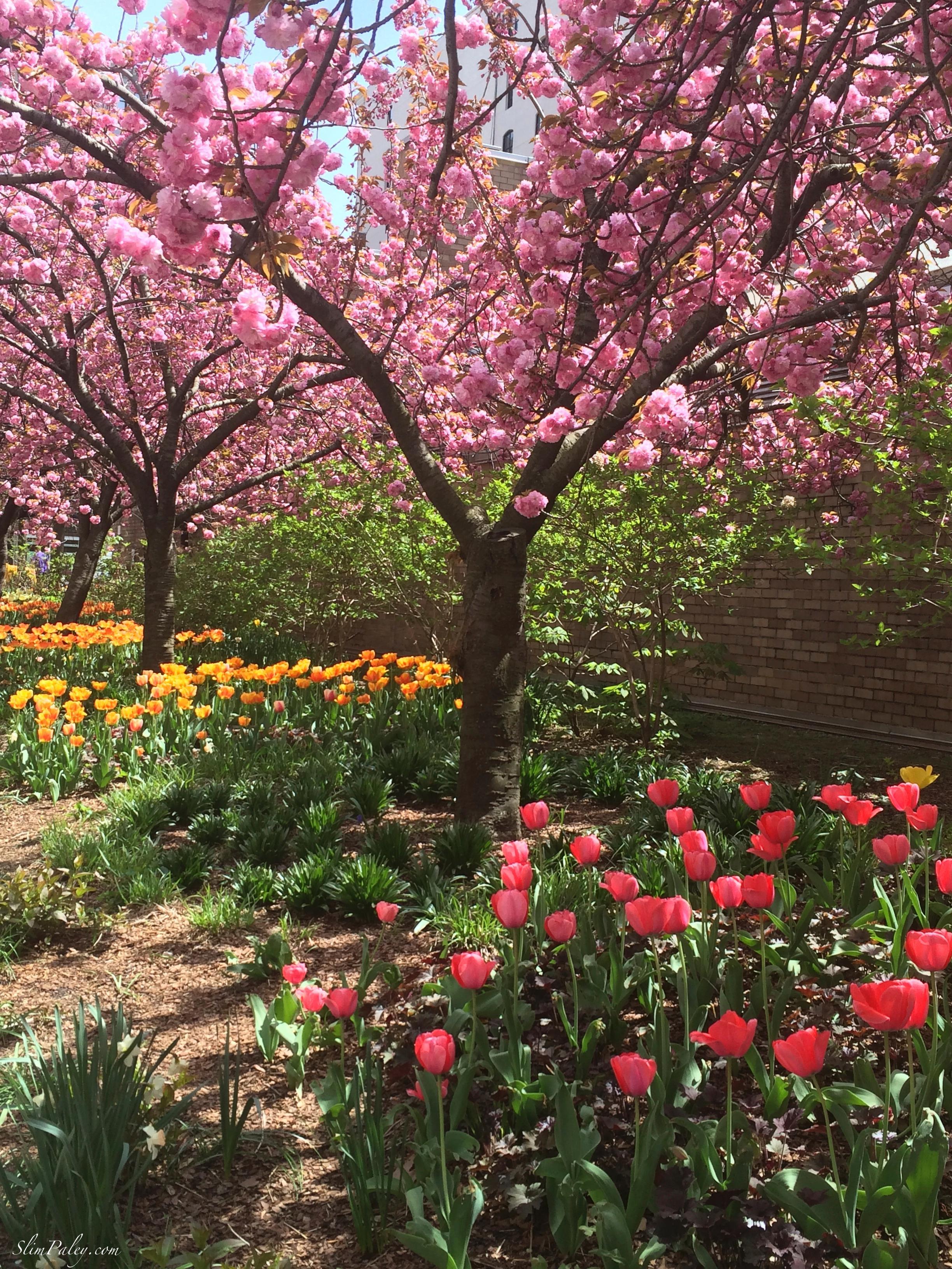Springtime NY slimpaley.com
