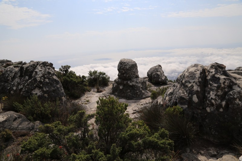 top of Table Mountain, Cape Town, SA  slimpaley