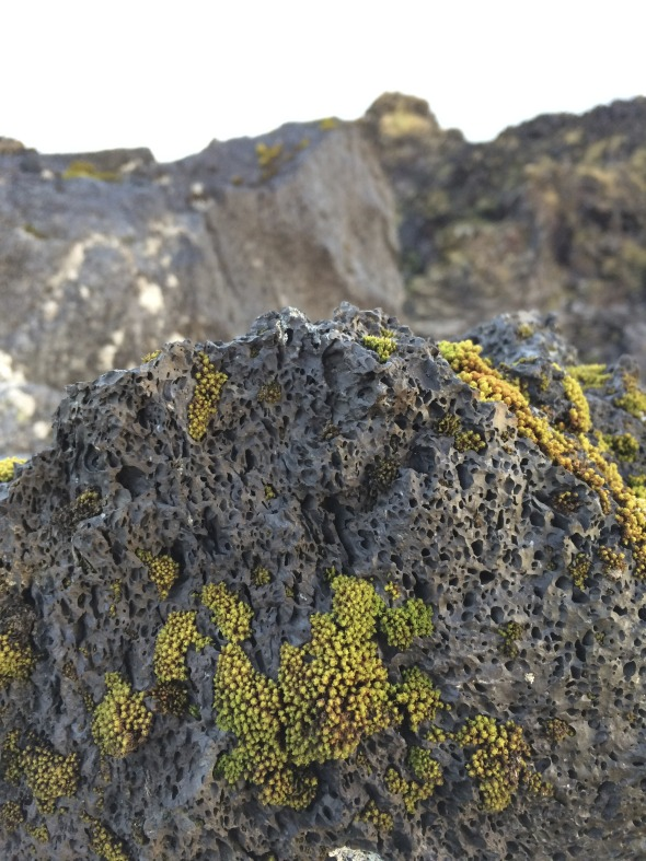 lava rocks and lichen
