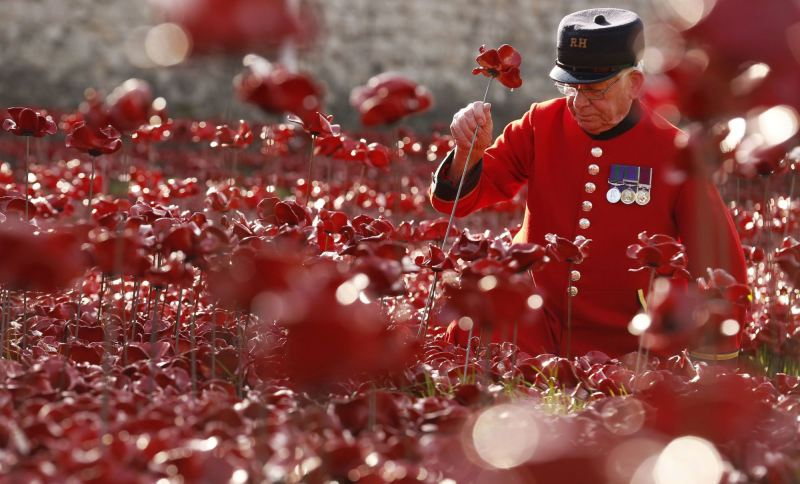 "Chelsea Pensioner Albert Willis plants a ceramic poppy amongst other poppies that form part of the art installation called ""Blood Swept Lands and Seas of Red"" at the Tower of London"