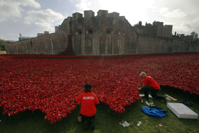 "Volunteers plant ceramic poppies amongst other poppies that form part of the art installation called ""Blood Swept Lands and Seas of Red"" at the Tower of London"