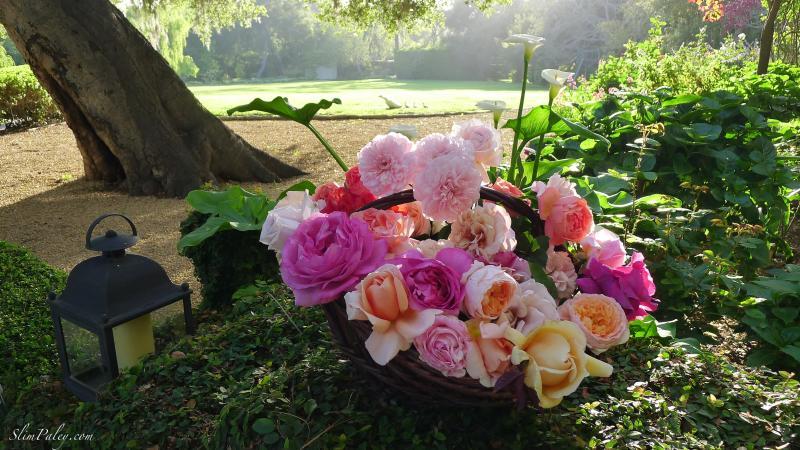 L1120067 roses slimpaley.com