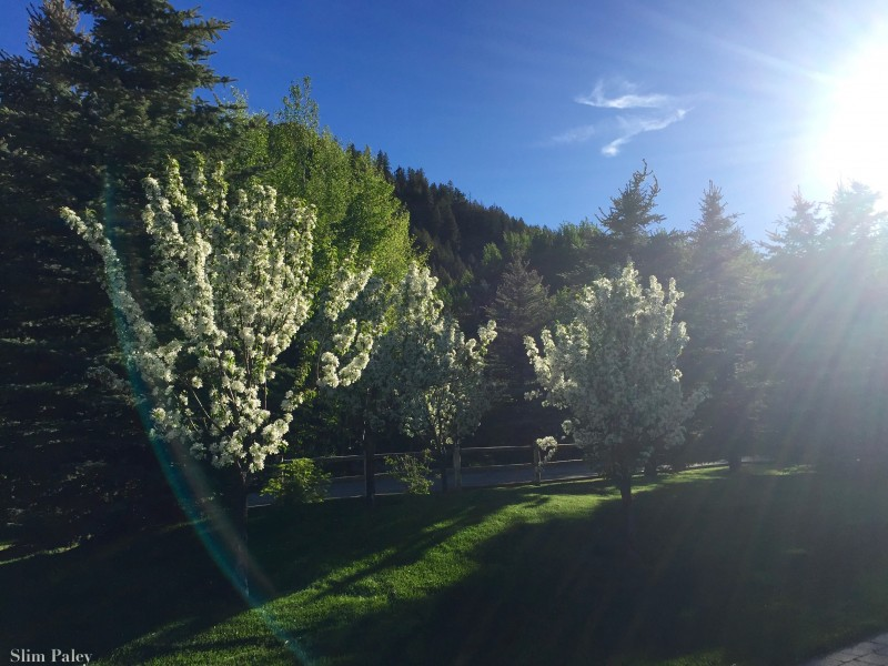 sun valley1